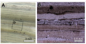 Figure 3: Micro-images of thin laminated chert beds.
