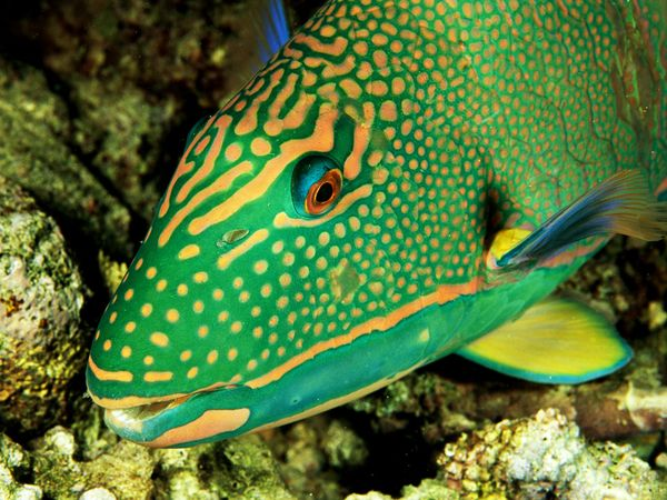 There is a need for healthy parrotfish to maintain the reef islands