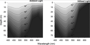 Fig 3. Modelled underwater spectral light field in Kongsfjorden at midday under clear sky conditions. Contours show the ambient underwater light as scalar irradiance (Ambient Light, left panel) and krill-utilized photons (Utilized Light, right panel). For both panels, light is expressed in units of μmol photons m-2 s-1 nm-1, derived from a radiative transfer model as described in the Materials and Methods.