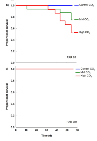 Figure 3 – Survival at the mid light level (PAR 65) and the high light level (PAR 304). Colored lines represent the different CO2 treatments; in (c), the control and mid-CO2 levels are the same as the high CO2 level.