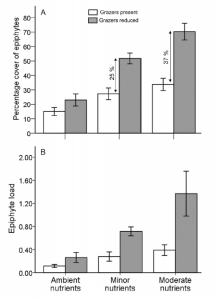 Fig. 4: These graphs show the response of epiphytes to nutrients treatments (x-axis) by grazer abundance (white vs. gray). The top figure shows percent cover of epiphytes and the bottom figure shows epiphyte load (which is a mass ratio taking into account seagrass mass).