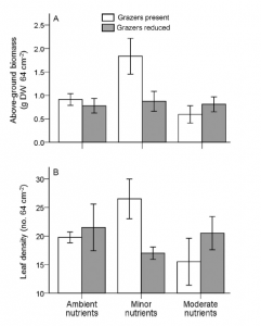 Fig. 5: These graphs show the response of seagrasses to nutrients treatments (x-axis) by grazer abundance (white vs. gray). The top figure shows seagrass biomass and the bottom figure shows seagrass leaf density.