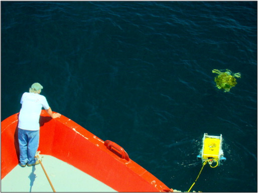 Figure 1 – The remotely operated vehicle (ROV) approaching a loggerhead sea turtle