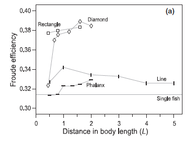 Figure 4 – The swimming efficiencies for each of the 4 school configurations compared to a single fish. Distance in body length (L) along the x-axis represents how close together the fish in the school were.