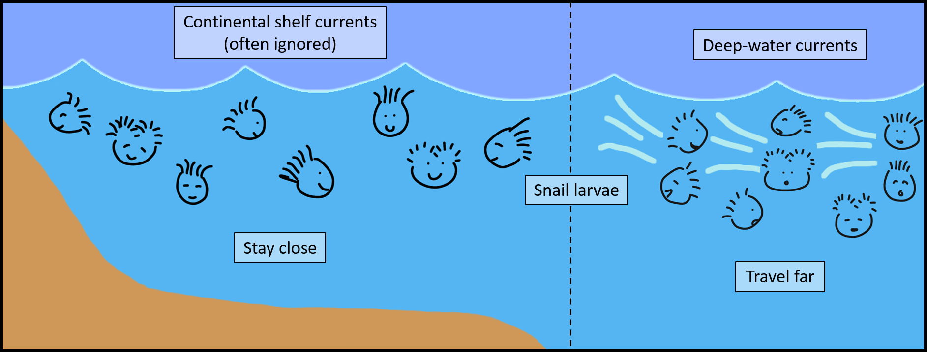 Small ocean currents can make a big difference in population connectivity