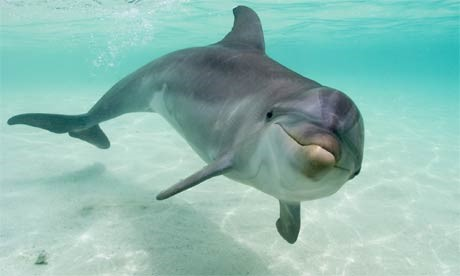 Sound waves: dolphins in a noisy ocean
