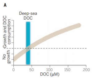 Figure 2: This study demonstrated that microbial growth and DOC consumption increases with DOC concentration, and that below a certain threshold (the dashed line) there is little growth. Current deep-sea DOC concentrations (blue bar) are at the lower limit for growth, explaining why DOC appears resistant to decomposition. From Middelburg (2015).