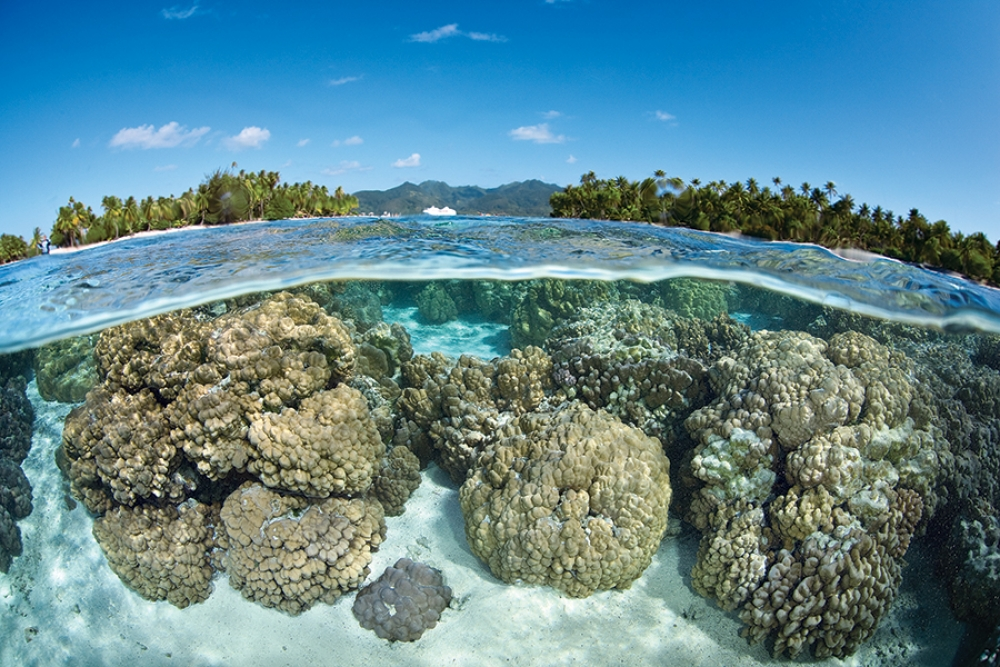 How a whole reef community's response to OA is impacted by the individual responses of different players