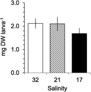Weight (mean mg DW larva− 1 ± 95% C.I.) in Nephrops norvegicus zoea II larvae after post-hatching exposure to salinity treatments (34 control, 21 and 17) at 15 °C for 12 days (n = 30).