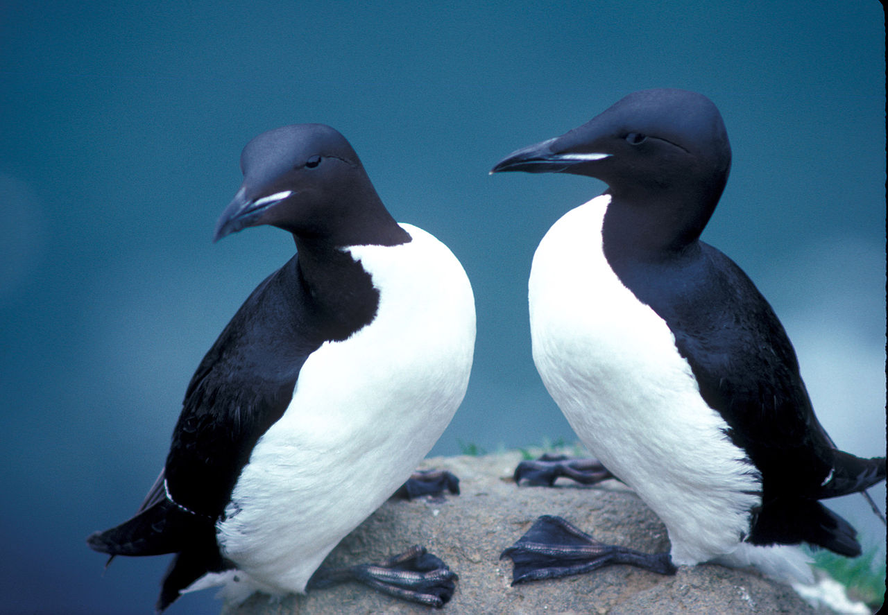 By the Light of the Night: Abiotic factors limit Arctic seabird foraging