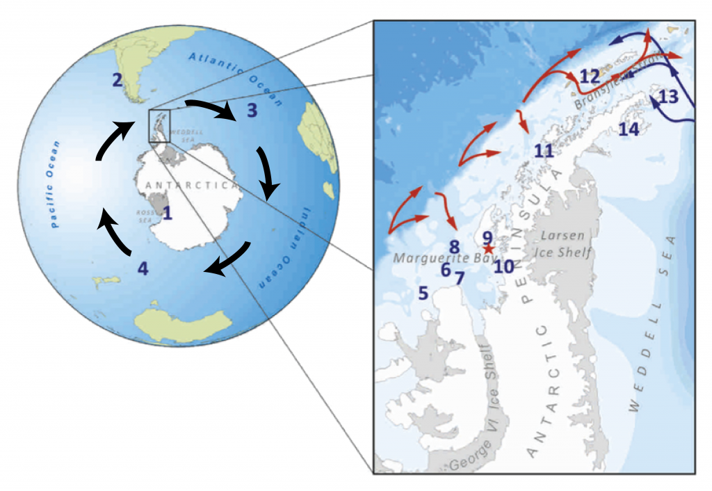Figure 1. Black arrows in the left panel indicate the direction of the southern westerly winds and the Antarctic Circumpolar Current around the continent. The red star in the right panel indicates the location of the sediment core used in this study. This site lies within Marguerite Bay, which is connected to the shelf break of the west Antarctic Peninsula by a deep trough. Red arrows indicate where Warm Deep Water flows along the shelf and moves onto the shelf through troughs, including the one connected to Marguerite Bay. (Fig. 1 in the paper, with added arrows to show wind and ACC.)