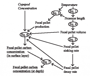 Figure 1: Schematic showing the development of the model. A series of equations are used to connect two inputs (copepod concentration and sea surface temperature) to fecal pellet carbon concentration at the surface and at depth.