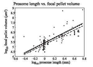 Figure 2: the relationship between copepod size and the size of their fecal pellets. The model uses a series of relationships like this to connect the variables shown in Figure 1.