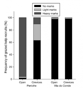 Figure 4 – Grazing marks on kelp: The large black bars at Vila do Conde (northern region) indicate very little grazing marks found on kelps in this area. The large grey bars at Peniche (central region), particularly in open reefs, indicate a very high percentage of kelps displaying evidence of grazing.