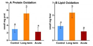 """Fig. 6. The livers of icefish exposed to long-term, but not short-term (""""acute,"""" red) elevations in water temperature had increased levels of oxidative damage to both proteins (A) and fats (B) relative to control animals (blue). Bars denoted by the same letter are not significantly different from each other. Adapted from Almroth et al., 2015."""