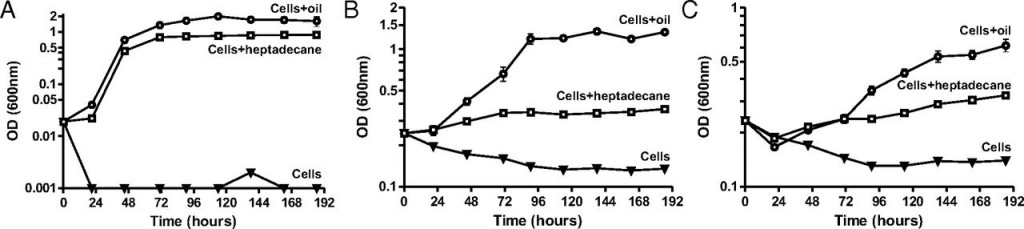 Figure 1: Concentration of three different species of oil-degrading bacteria (A,B, and C) during incubation experiments. All three survived and multiplied when mixed with oil or heptadecane (one of the alkanes produced by cyanobacteria), but mostly died off when oil was not added.