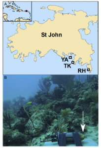 Fig. 2: A) Site Map showing Tektite (TK), Ram Head (RH), and Yawzi (YA) reef locations. B) Example of acoustic sampler deployment on a reef.