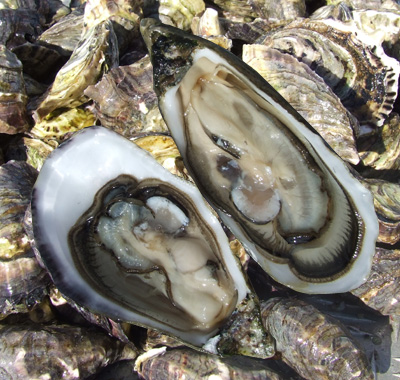 Stressed-Out Oysters: Molecular Coping Mechanisms for Anxiety