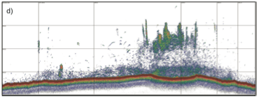 Figure 3: Cod spawning in the Notre Dame Channel in May 2015.  Seabed is red, and grid measures 1 nautical mile vertically and 50m horizontally.