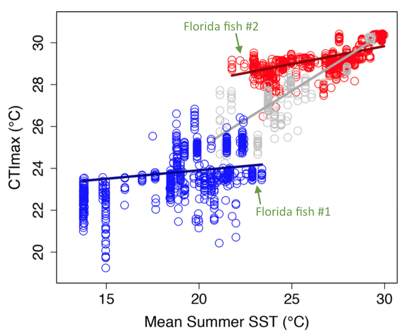 Figure 1. Thermal tolerances for species living in a wide range of environments tend to fall either in tropical or temperate conditions, but not in between (typical of subtropical). Two species of fish living in an area with the same average summer sea surface temperature can have different maximum thermal tolerance (Extended Data Figure 8 in paper).
