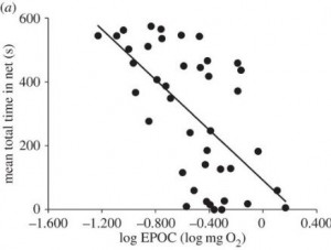 Fig. 4. Fish with greater excess post-exercise oxygen consumption, EPOC (horizontal axis), tended to spend less time in the trawl net (vertical axis), suggesting anaerobic capacity has a role in determining an individual's catchability. Adapted from Killen et al., 2015.