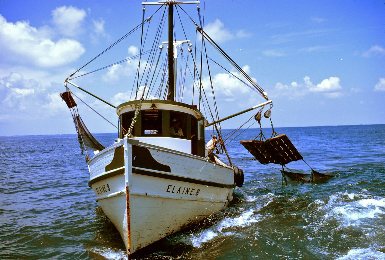 Trawling selects for faster fish