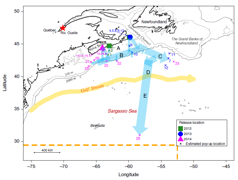 Figure 2. Pop-up satellite tag locations for eels and estimated migration paths. The route is defined by the authors as 5 distinct segments.