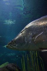 Disoriented fish are getting lost at sea!