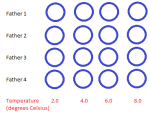 Figure  2 – An example of the experimental design : an equal number of fertilized eggs from each father were tested separately at each experimental temperature.