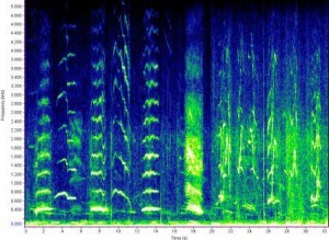 Image 1: A Spectogram depicting the moans of a humpback whale. Whale moans are considered as social sounds! Credit: NOAA North East Fisheries Service