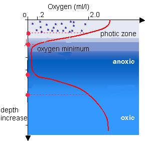 Figure 1: Oxygen Minimum Zones are places in the ocean where oxygen levels (shown by the red line) are much lower than in other areas within the ocean. Image source:  msnucleus.org