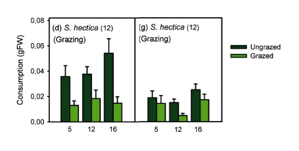 Fig. 5: Structural defense may play a role. S. hectica shows a much greater preference for ungrazed blades in trials with blades (left) than those with ground up reconstituted blades (right). Source: Martínez-Crego et al. 2015 (modified for simplification).