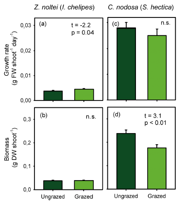 Fig. 6: Growth and biomass from feeding trials using each seagrass' most voracious grazer. Z. noltei grows faster when grazed so that its biomass stays the same. C. nodosa's biomass decreases because it grows at the same rate. Source: Martínez-Crego et al. 2015.