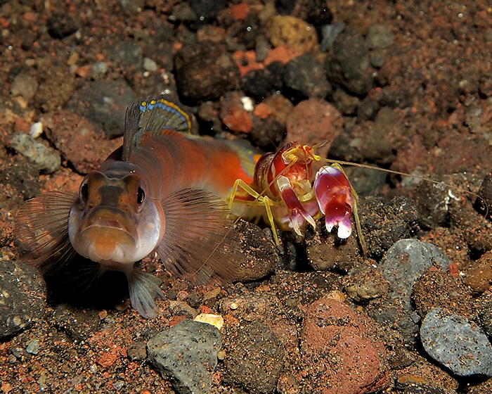 Odd Couples ♥ Tales of Symbiosis in the Ocean