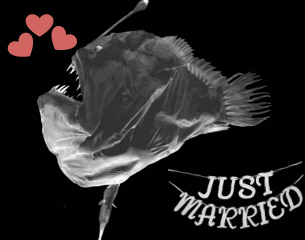 Figure 5: Happy Valentine's Day! Sources: Anglerfish, cited paper (Pietsch 2005); banner, https://item2.tradesy.com/images/david-tutera-silver-glitter-just-married-hanging-banner-brand-new-4538911-0-0.jpg?width=720&height=960)