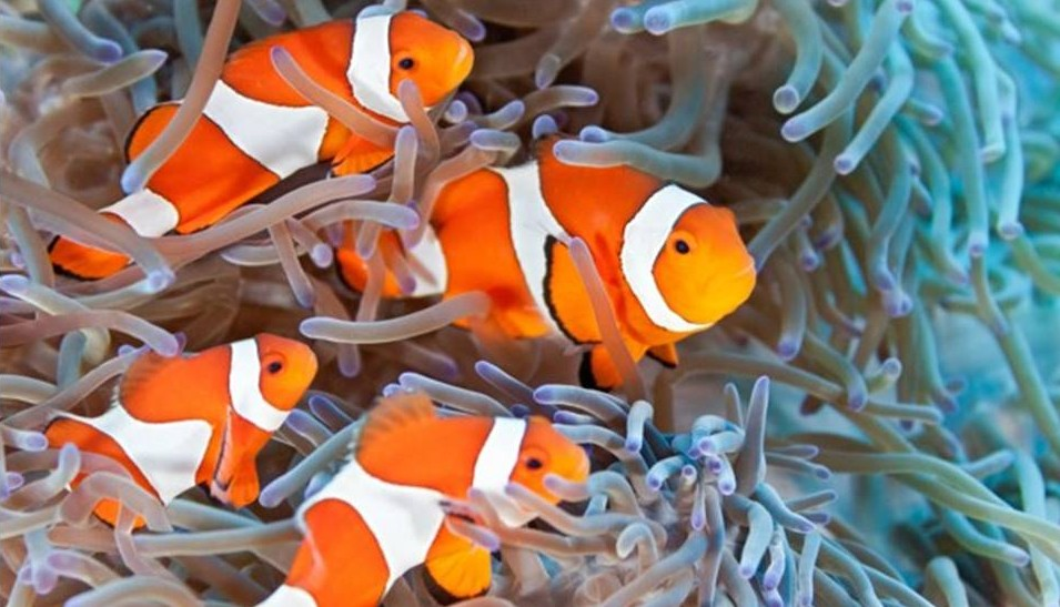 Sea of Love: Hermaphroditic fishes
