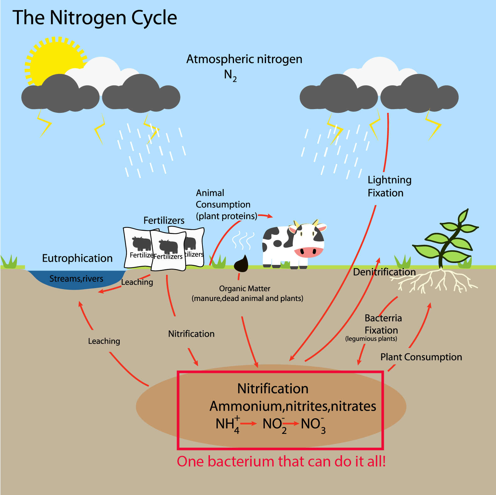 One to tango: a bacterium that does the work of two in the nitrogen cycle