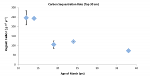 Figure 3: The rate of carbon sequestration, or carbon trapping, decreased with the age of the marsh. However, the older the marsh, the more resistant that carbon is to being turned back into carbon dioxide. (Davis et al., 2015)