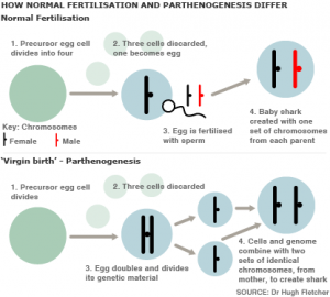 Figure 2: How sexual reproduction (top) differs from parthenogenic asexual reproduction (bottom). Diagram from: nova.edu