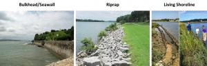 Figure 2: Three types of shoreline control. A) Seawall, 2) riprap, 3) a living shoreline in Delaware.