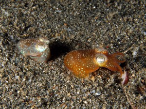 Squid pair. Credit: Nick Hobgood.