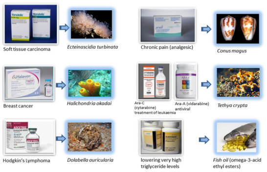 Figure 2 - Medicines and their little known sources: marine life!