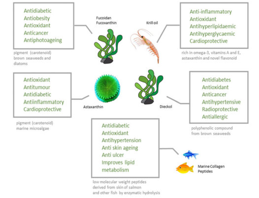 Figure 3 - Nutraceuticals and pharmaceuticals with their lesser known sources: more marine life!