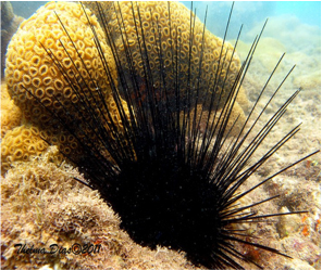 The importance of sea urchins