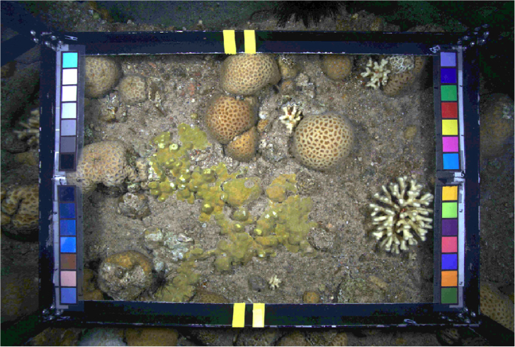Coral! At The Disco: Using fluorescence (and computer science) to label reef data