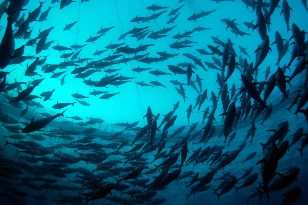 What happens to human health when we feed crops to farmed fish?