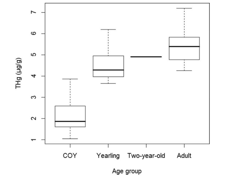 """The authors compared mercury levels in """"cub-of-year (COY)"""", which were cubs born that year, 1-year and 2-year old cubs, and adult polar bears. They found that hair mercury levels tended to increase with age in the bears. Reproduced with permission from Bechsoft et al. 2016. Copyright ACS 2016."""