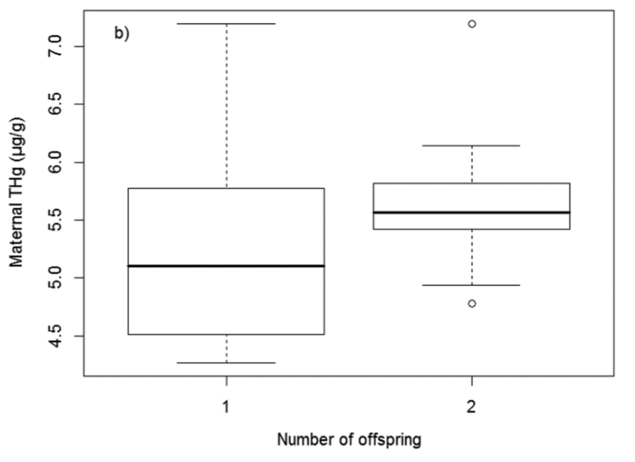 Figure 2. The researchers compared mercury levels in polar bear moms with one cub to levels in moms with two cubs, and found that the moms with two cubs tended to have higher levels of mercury, possibly due to larger appetites. Reproduced with permission from Bechshoft et al. 2016. Copyright ACS 2016.