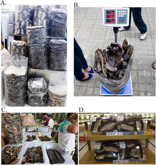 Fig 3: Collecting stock estimates of various species. Photos taken from O'Malley et al. 2016.