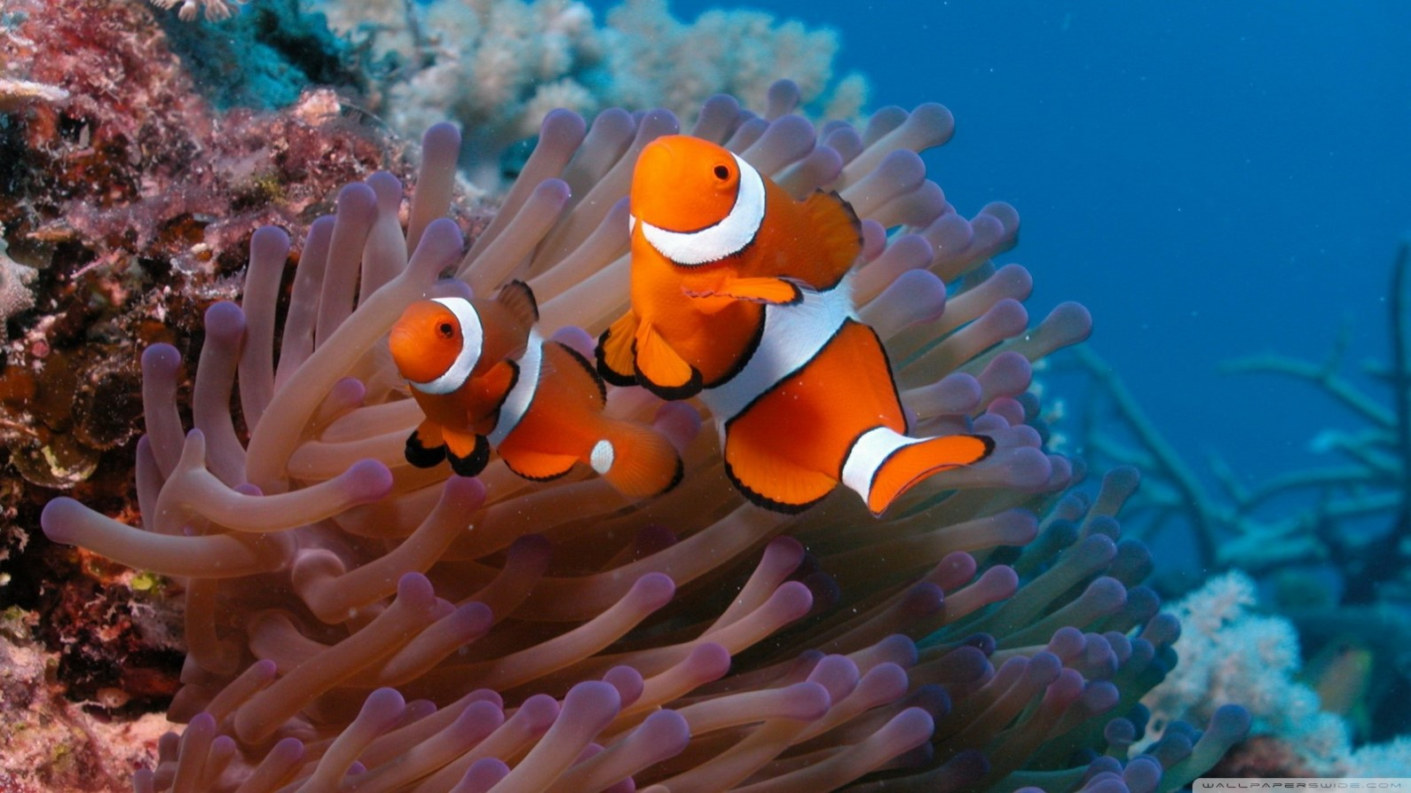 Changing with the environment: how resilient are coral reef fish?